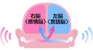 音は耳で聞いて脳で処理します